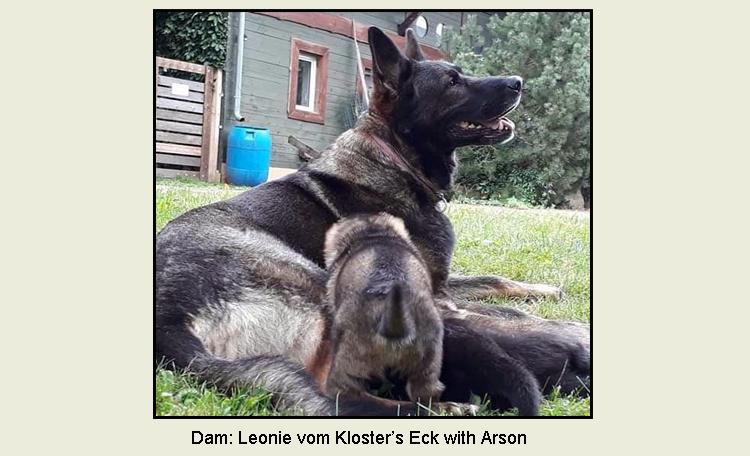Leonie vom Kloster's Eck